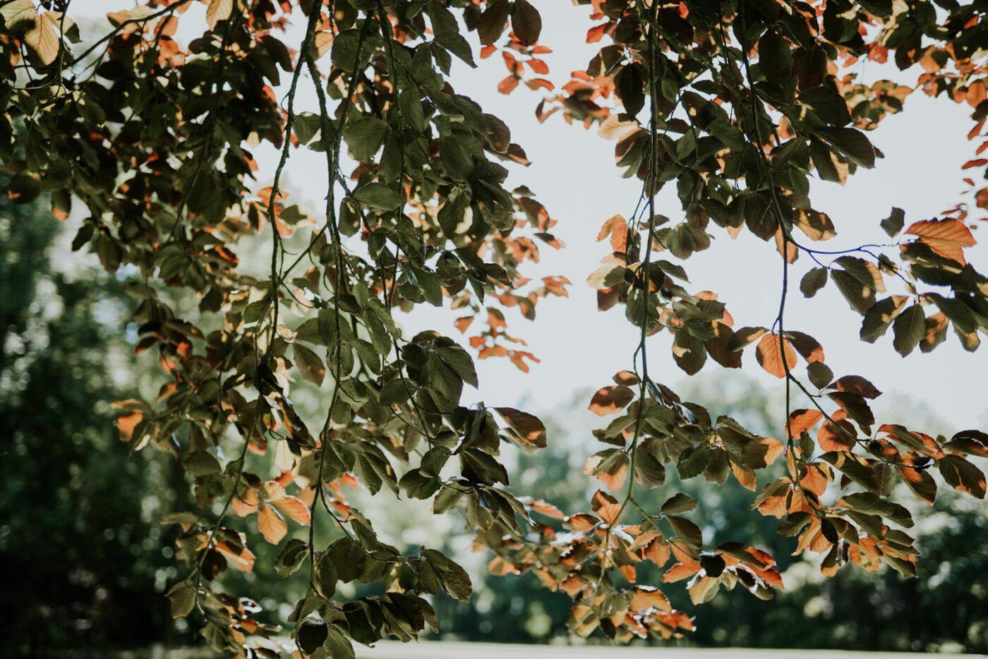 La lumière dans les feuilles du Chateau de Couturelle